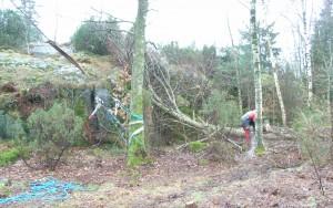 avverkninging kräver i vissa lägen extraordinära åtgärder för att få träden att falla åt rätt håll.
